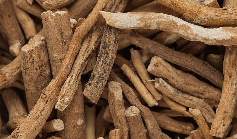Bois de racines d'ashwagandha