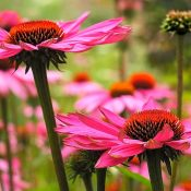 Top 10 des meilleures plantes pour booster son système immunitaire naturellement